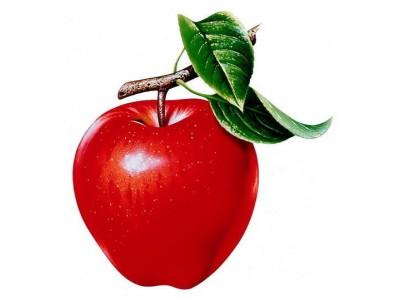 Полив и удобрение молодого яблоневого сада