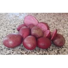 Картофель семенной Крэнберри, супер-элита, 10 шт.