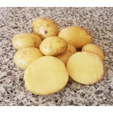 Картофель семенной Чароит, супер-элита, 10 шт.