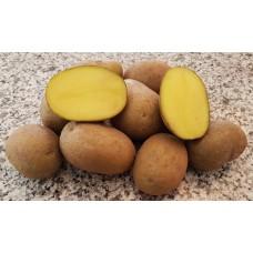 Картофель семенной Манифест, супер-элита, 10 шт.